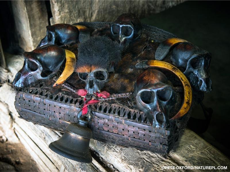 A Konyak Naga head trophy basket adorned with a bell, fur, boar tusks, and six skulls of western hoolock gibbon and capped langur
